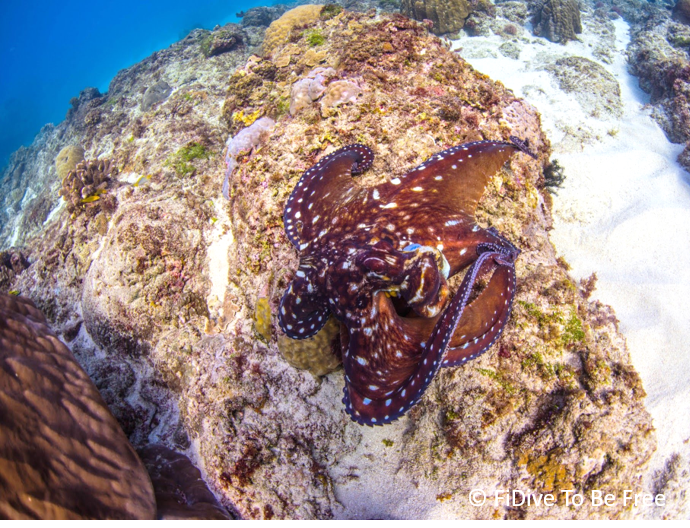 marine life day octopus