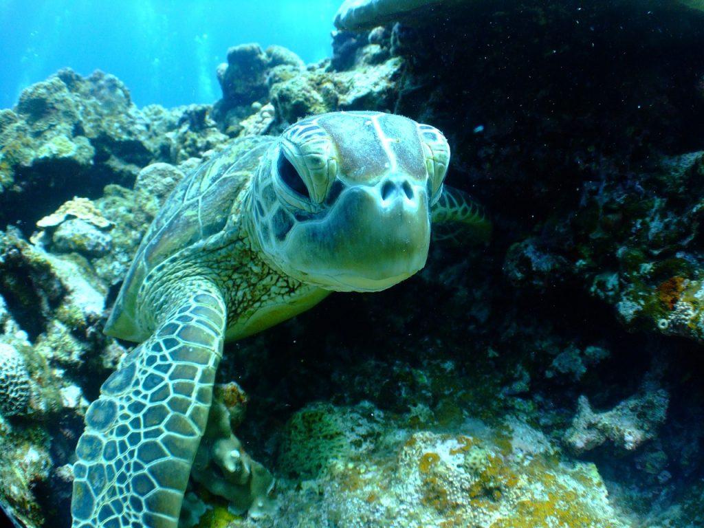 turtle, sea, diving
