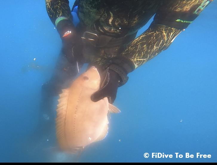 FiDive Spearfishing Ikejime