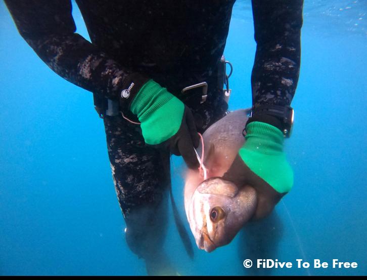 FiDive Spearfishing Humane Killing